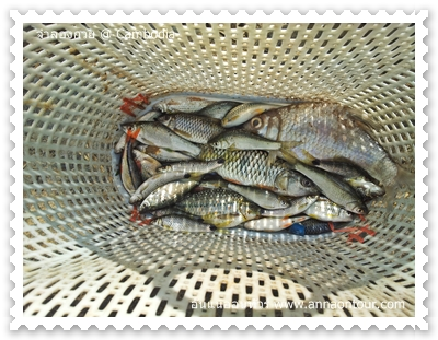 ปลาที่หาได้จากจำลองกวย