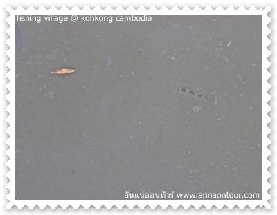 ปลาเสือที่มาหากินในหมู่บ้าน