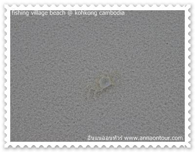 ปูลมมีให้เห็นเต็มชายหาด
