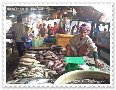แผงขายปลาในตลาดไพลิน