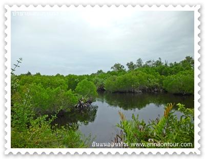 ป่าโกงกางในป่าชายเลนเกาะกง