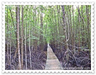 ทางเดินเที่ยวป่าชายเลน
