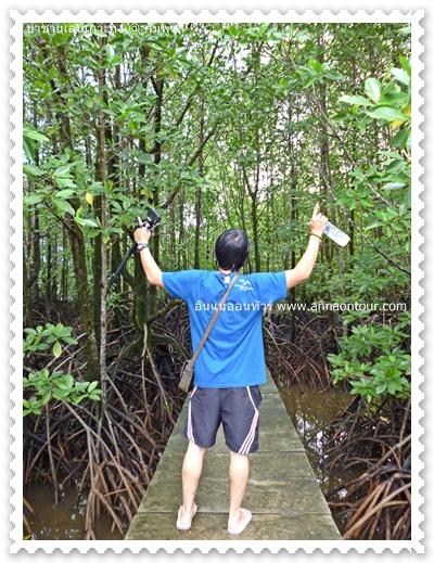 เดินเที่ยวป่าชายเลน