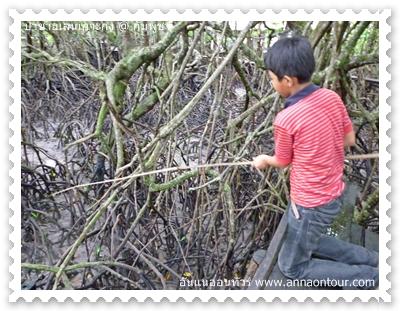 เด็กพัมพูชาจับปูในป่าชายเลน