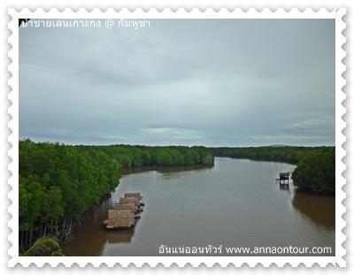 เส้นทางล่องเรือชมป่าชายเลน