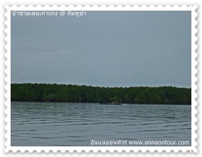 ผืนป่าชายเลนในเกาะกง