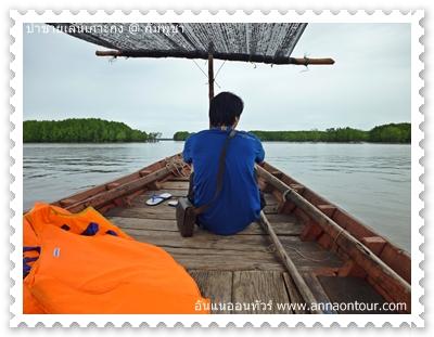 นั่งเรือชมป่าชายเลน