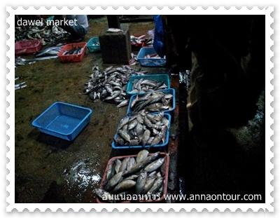 ปลาในตลาดสดตลาดทวาย