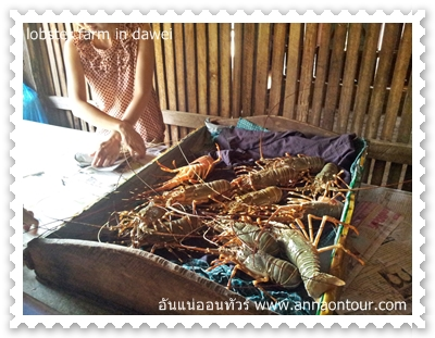 lobster farm in dawei
