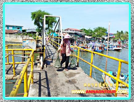 ที่เลี้ยงตลาดปูชักริมทะเลอ่าวไทย