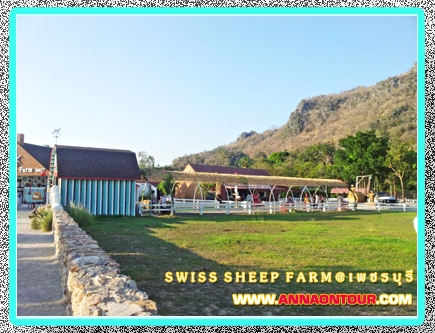 swiss sheep farm ชะอำ