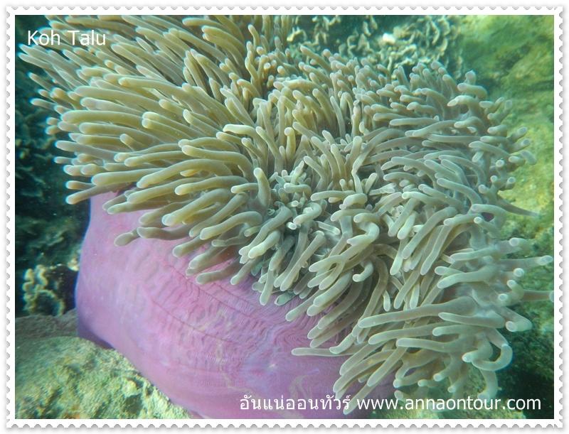 ปะการังสวย ๆ เกาะทะลุ