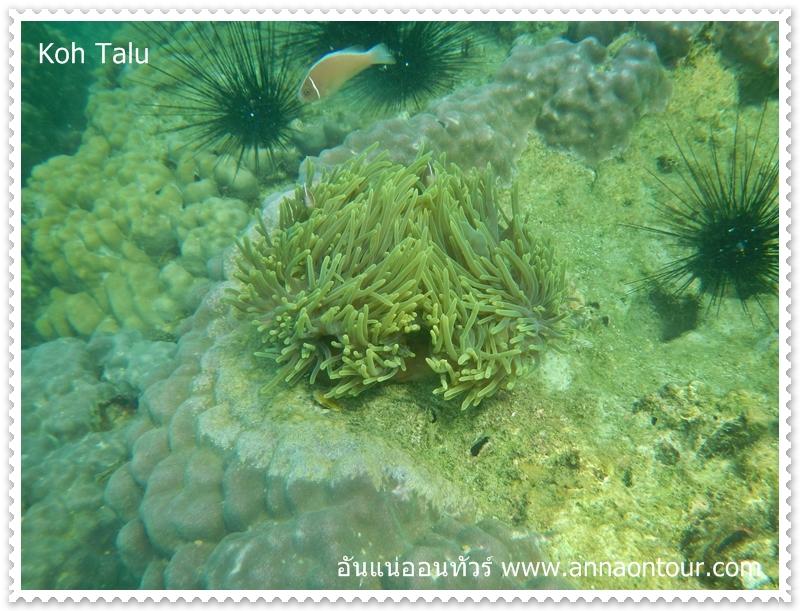 ปะการังในเกาะทะลุ