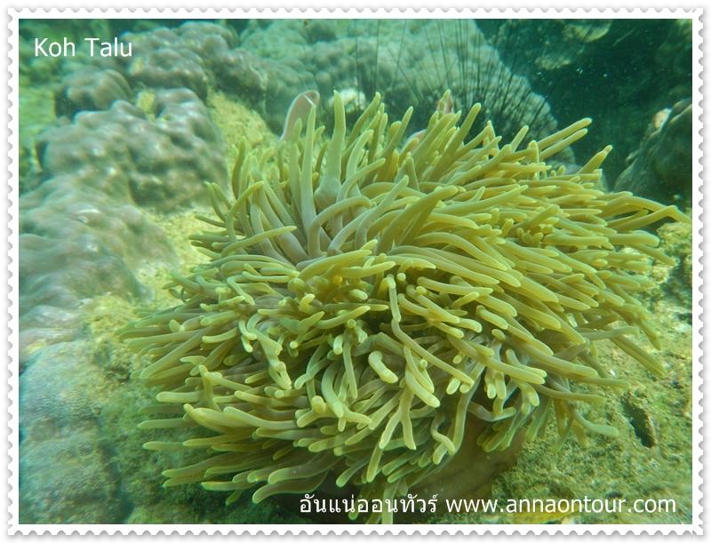 ปลาอาศัยในปะการังเพียบ