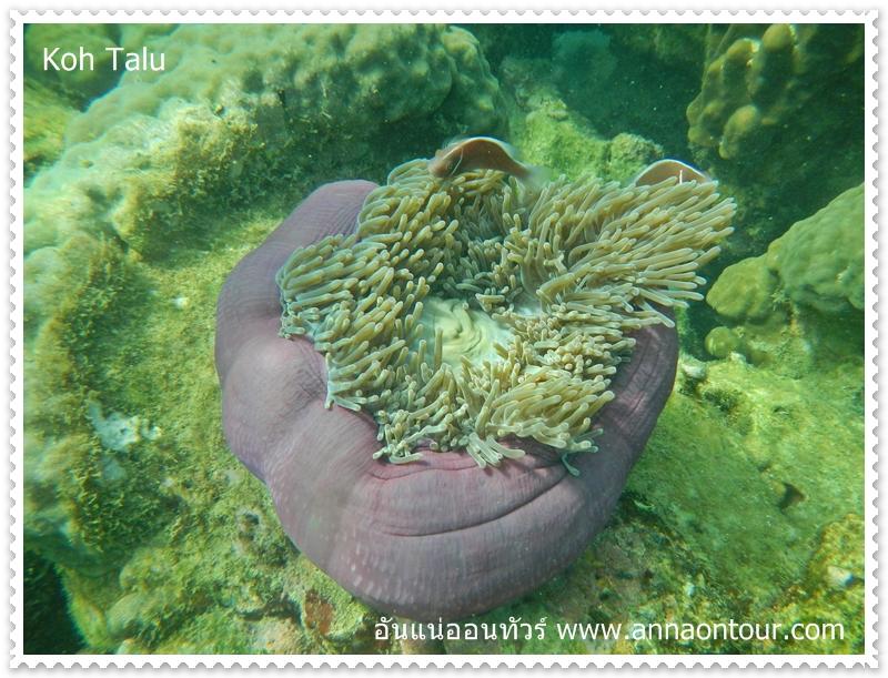 ปะการังฝั่งอ่าวไทย