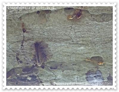 รังผึ้งเต็มเพดานหิน