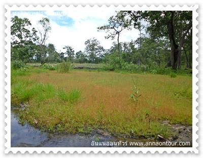 มีธารน้ำเล็ก ๆ หล่อเลี้ยงทุ่งหญ้า