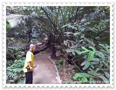 ทางเดินชมหุบป่าตาด