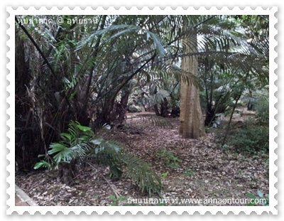 ต้นไม้ที่หายากในหุบป่าตาด