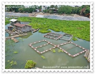 กระชังเลี้ยงปลาในแม่น้ำสะแกกรัง