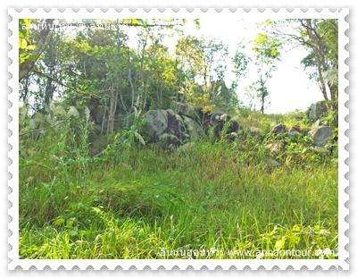 หินที่อยู่ในดงป่า